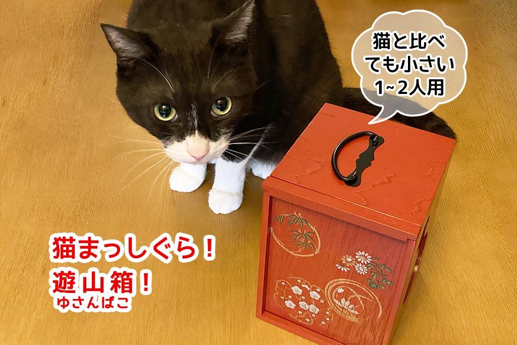 遊山箱と猫