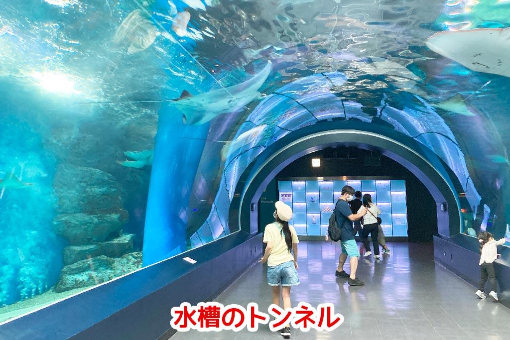 人気の水槽のトンネル